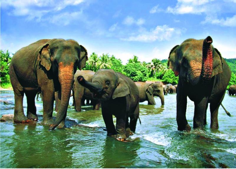 Badeferie på Sri Lanka